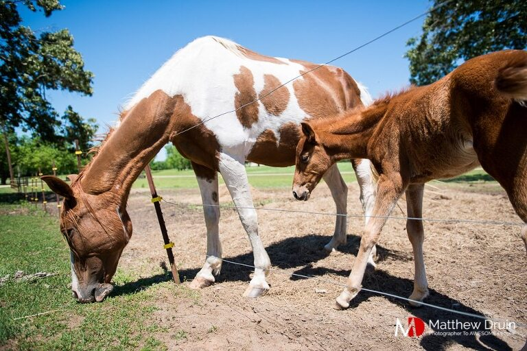 Horses at Perry's Landing Georgia farm wedding